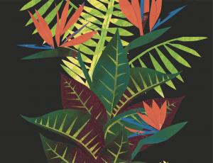 Amazonia-Novos
